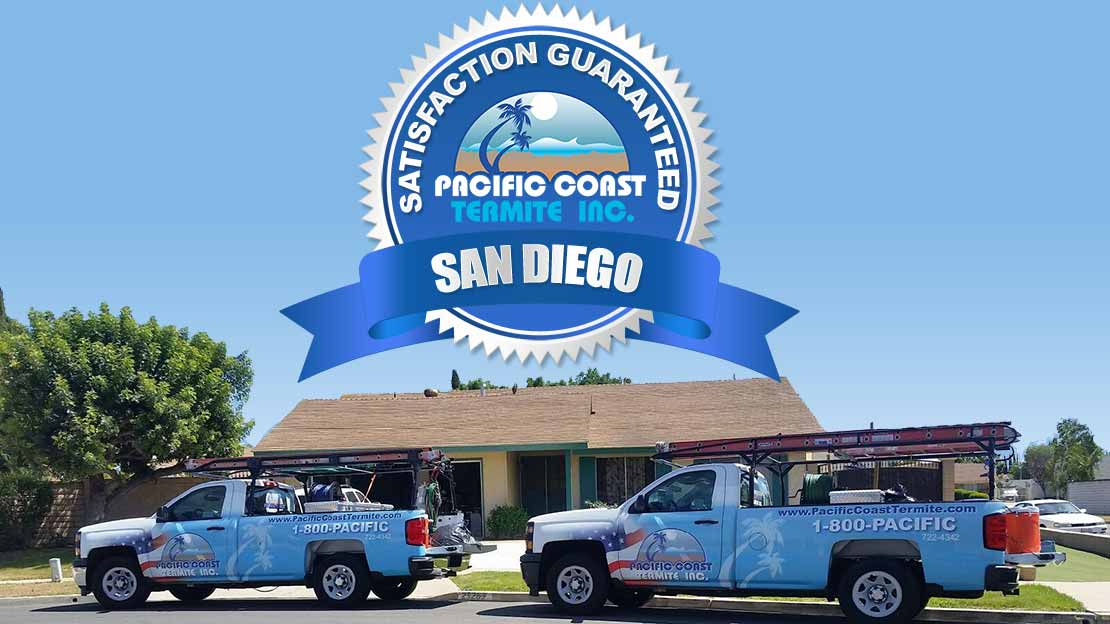termite company San Diego County CA