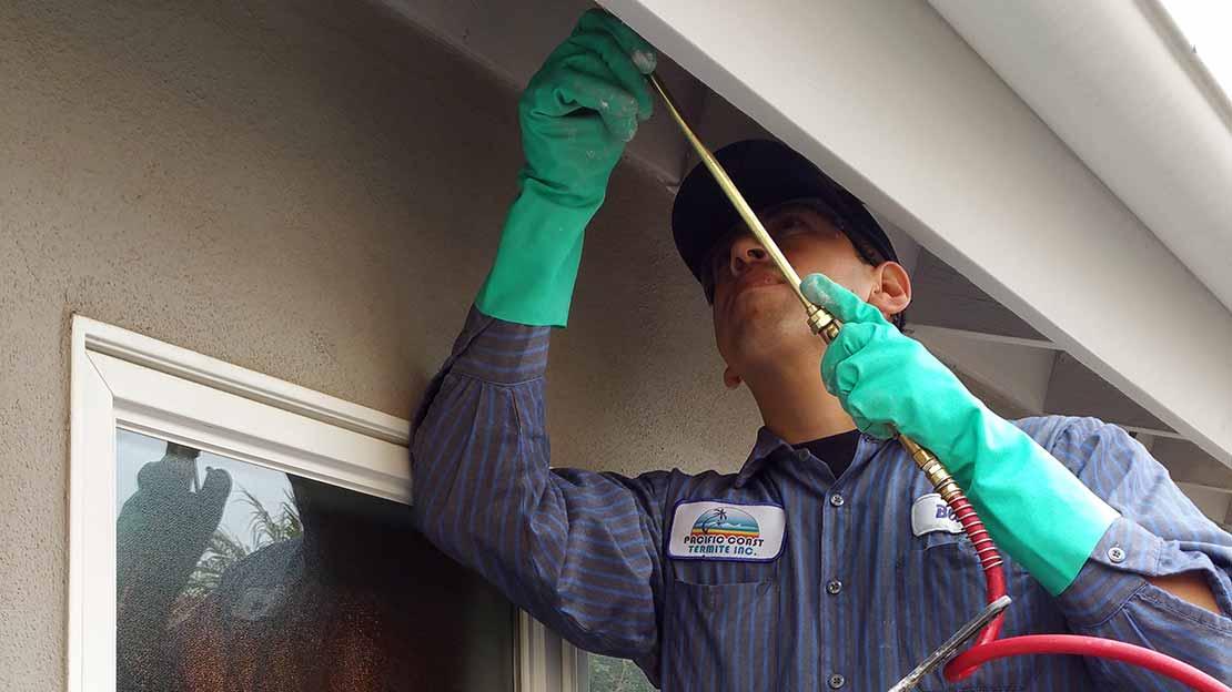 Termite Control Amp Removal California