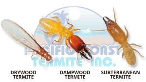 3 types of termite species