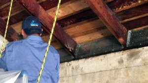 rodent control rodent exclusion service