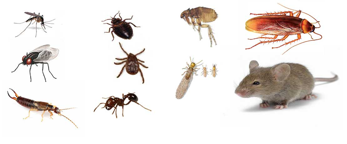 diagram of unwanted household pests