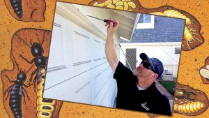 free termite inspection by pacific coast termite
